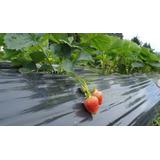 Frutillas Nylon Mulch Para Cultivos - Excelente Calidad !!!