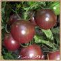Tomate Cherry Negro, 30 Semillas