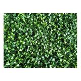 Muro Verde Jardin Vertical 60 X 40 Cm