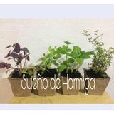 Plantines De Huerta Souvenirs
