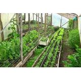 Catalogo De 200 Variedades De Semillas Para Huerta Organica.