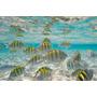 Lámina 45x30 Cm. - Peces De Colores Tropicales En Mar Caribe