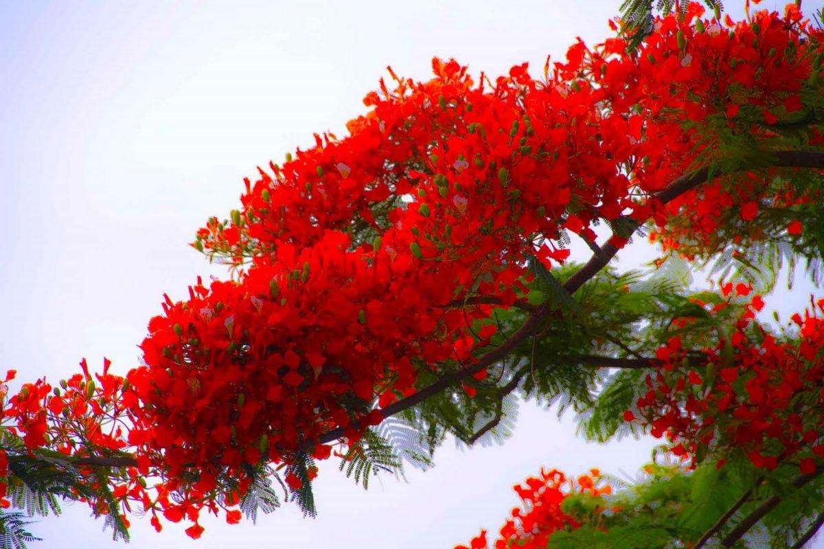 Uruguay natural internacional chacra xcix jardin for Arbol del fuego jardin
