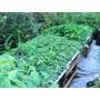 Plantines Huerta Organica Docena Tomate Morron Apio Etc