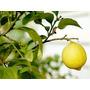 Arboles Frutales Variedad De Especies