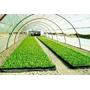 Nylon Con Filtro Uv Ideal Invernaculos Usos Varios Agricola