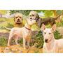 Perros Bull Terrier Y Dandie E. Miner 1923 - Lámina 45x30 Cm